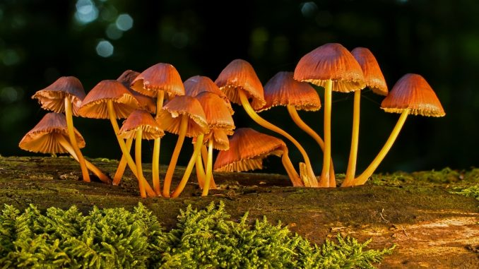 Mushrooms could make your meals more nutritious!
