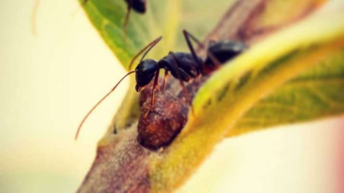 Social isolation behavior in ants is similar to that of humans