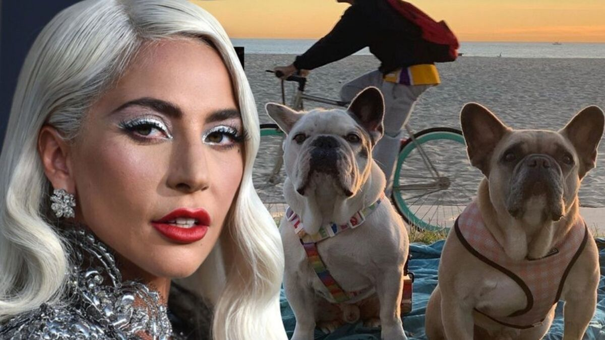 Lady Gaga's dognappers charged with attempted murder, robbery